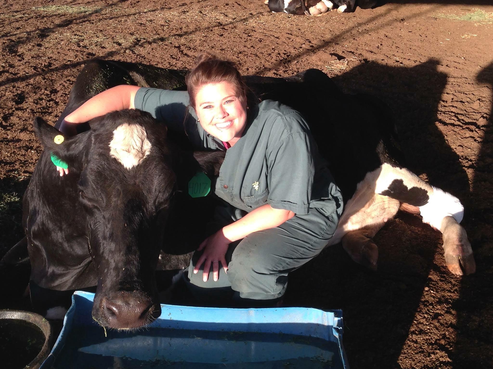 Livestock Vet